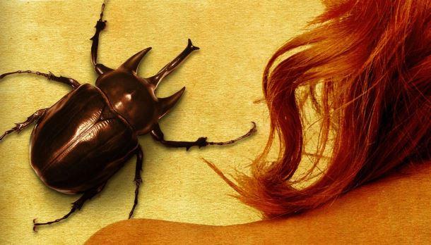 escaravelhododiabotop